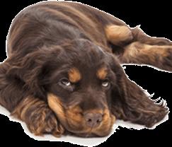 Wielokierunkowe świadczenia pielęgnacyjne dla psów